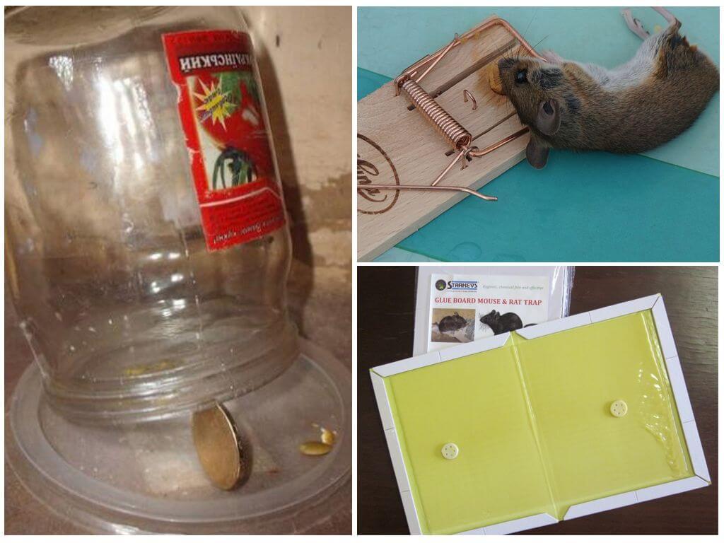 Как можно поймать мышь в доме без мышеловки