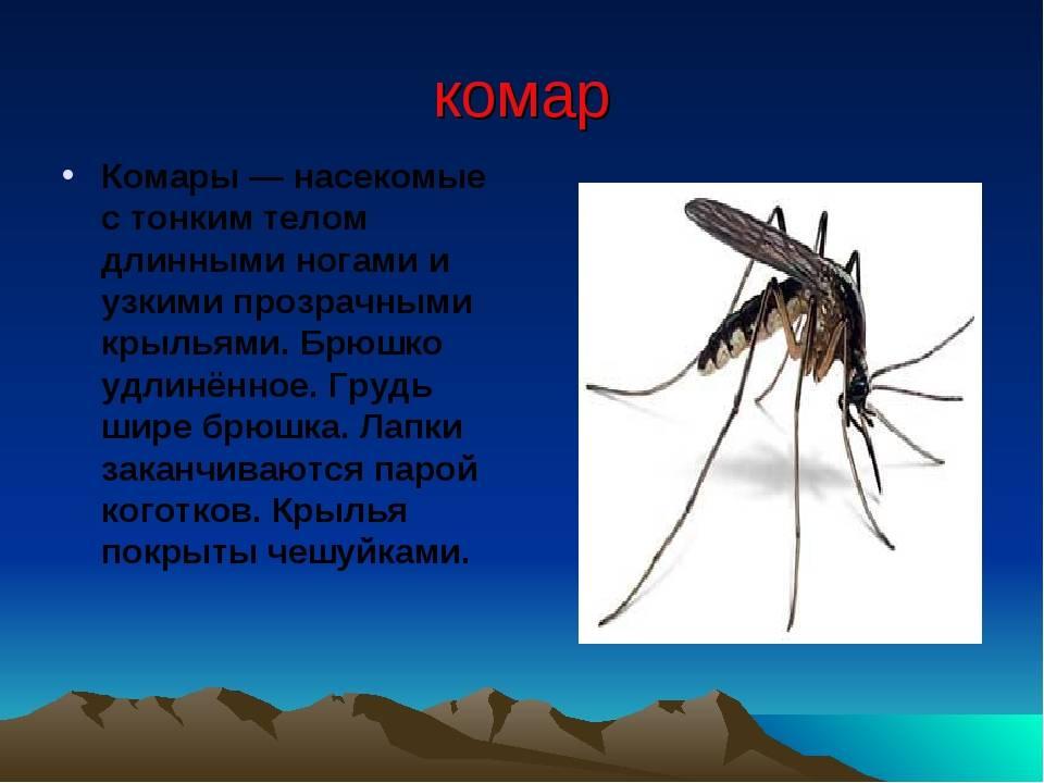 Особенности комара карамора (долгоножка): питание, жизненный цикл и размножение