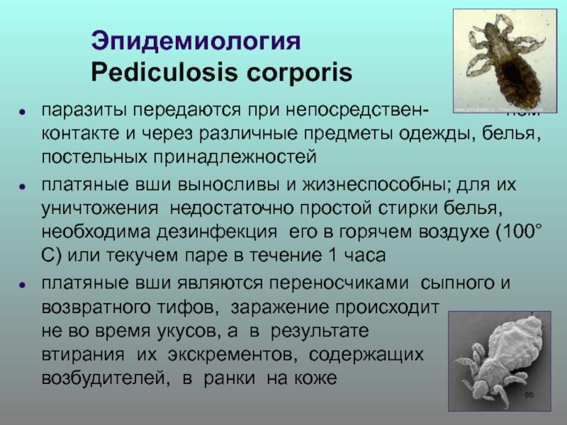 Муха цеце – фото и описание
