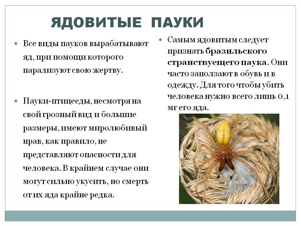Какую роль и значение играют пчелы в природе и жизни человека