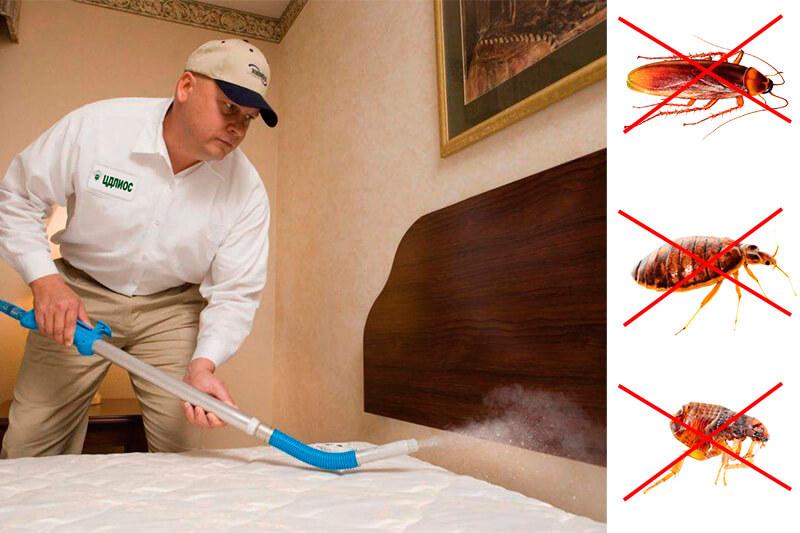 Уничтожение тараканов - как избавиться от насекомых навсегда