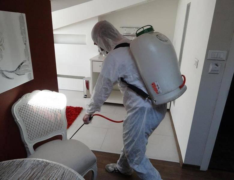 Средства против клопов: чем обработать квартиру, чтобы вытравить кровососов раз инавсегда