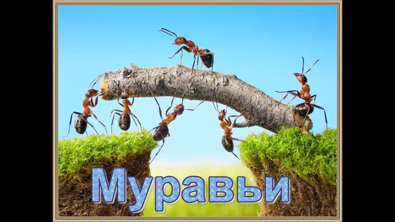 Интересные факты о муравьях для детей: топ-10