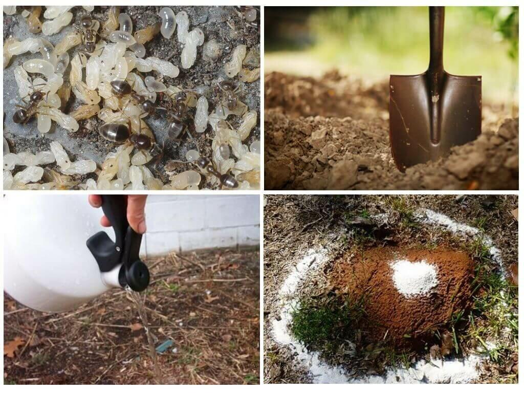 Как избавиться от муравьев на даче или в огороде. простой народный способ, как уничтожить муравьев