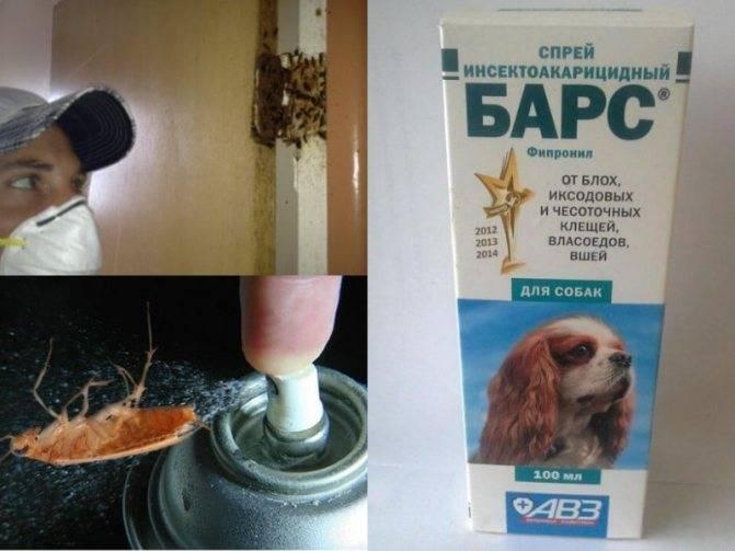 Спрей барон от тараканов отзывы - бытовая химия - первый независимый сайт отзывов россии