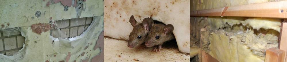 Как бороться с мышами в частном доме (деревянном, каркасном): защитить при строительстве