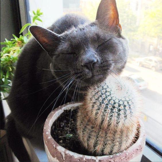 """Почему кошки охотятся на мух и едят их? — обсуждение в группе """"кошки""""   птичка.ру"""