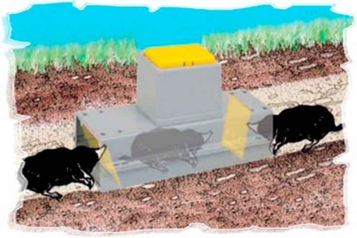 Отпугиватели кротов – ультразвуковые, электронные и другие виды