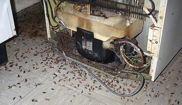 Откуда берутся тараканы в квартире - основные причины появления