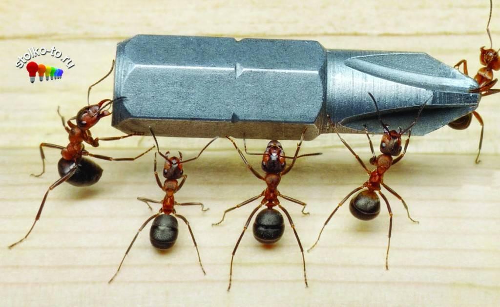 Сколько весит муравей - сорнякам нет