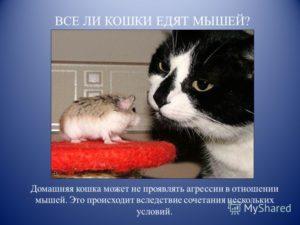 Коты-крысоловы: какую породу выбрать