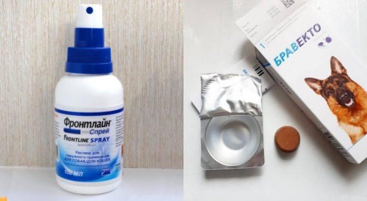 Таблетки от клещей для собак: обзор, применение таблетки от клещей для собак: обзор, применение