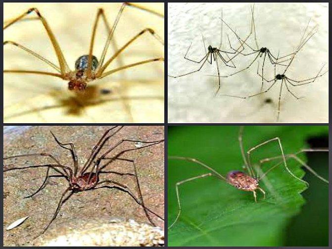 Лучшие средства против паукообразных