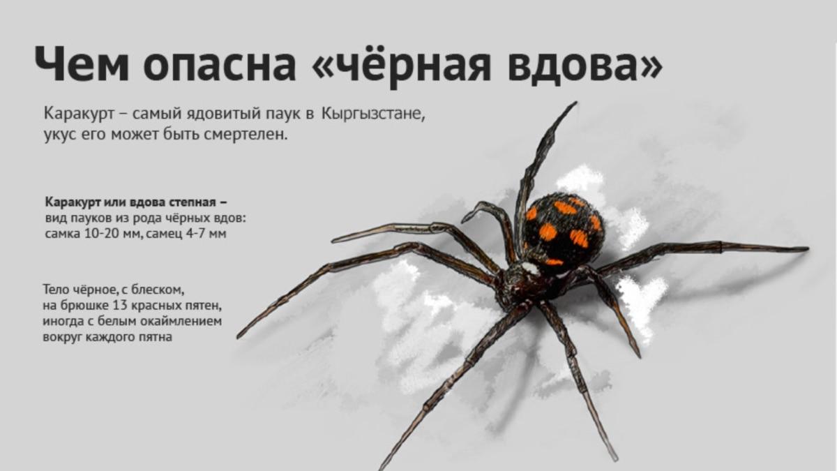 Ядовитые пауки россии – фото, названия и описание