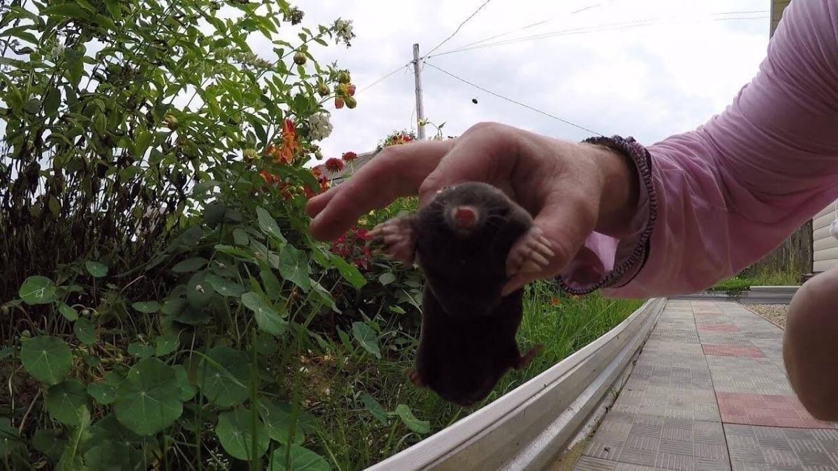 Как навсегда избавиться от мышей на даче: эффективные средства
