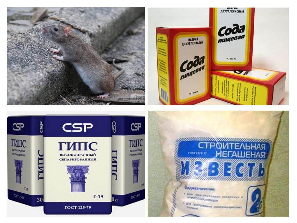 Отрава для мышей: использование яда в домашних условиях
