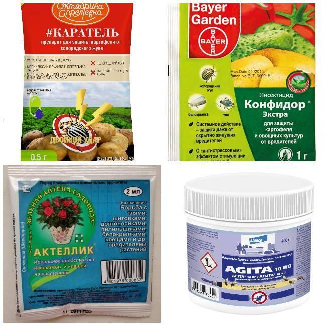 Какие средства от колорадского жука выбрать – обзор популярных препаратов - дачно-огородные радости - медиаплатформа миртесен