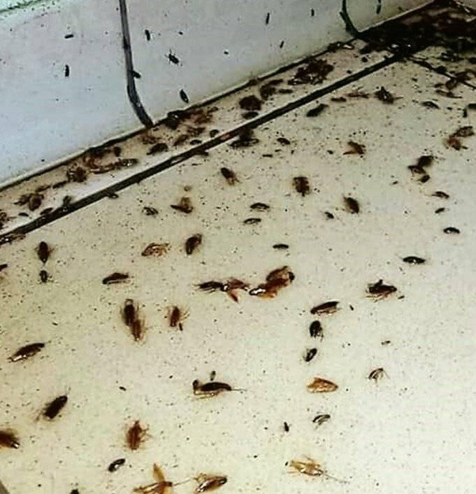 Откуда черные тараканы в квартире и как избавиться