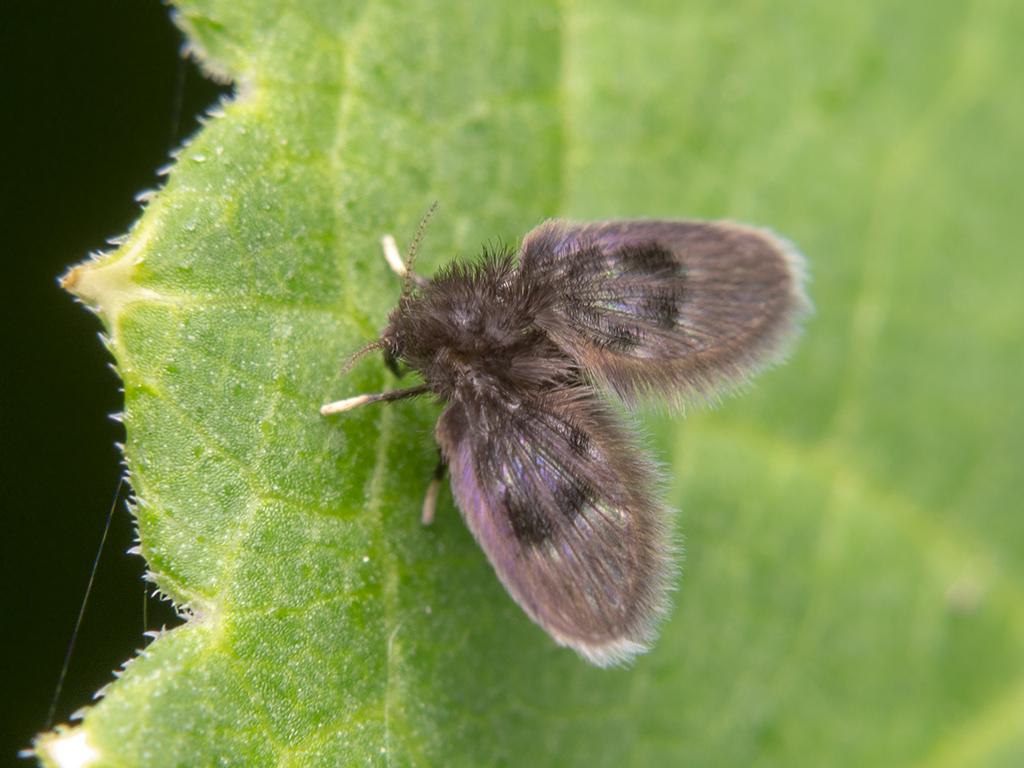 Дома завелись белые червячки быстро бегают. насекомые в ванной комнате: непрошенные гости и методы борьбы с ними