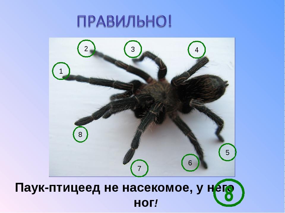 Сколько ног у паука