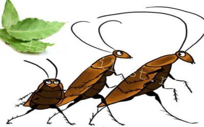 Нашатырь против тараканов, боятся ли она его и как использовать в квартире?