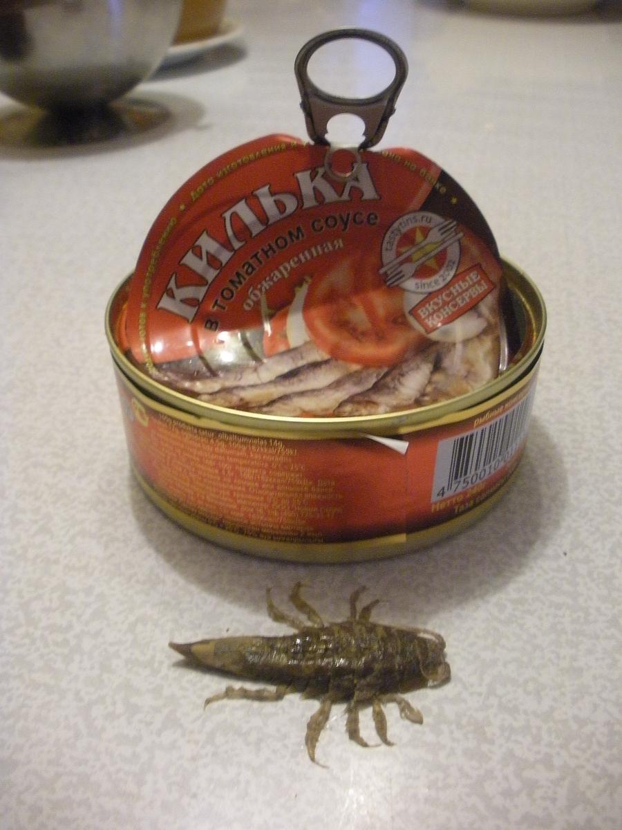 Как выглядит морской таракан: фото с описанием