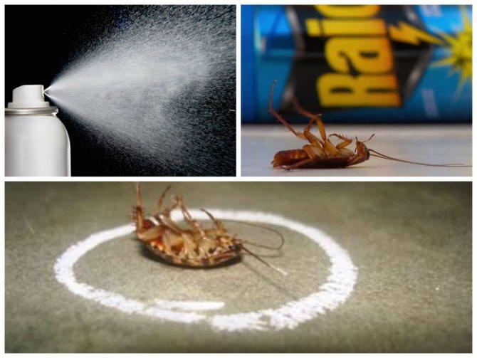 Чего боятся тараканы?