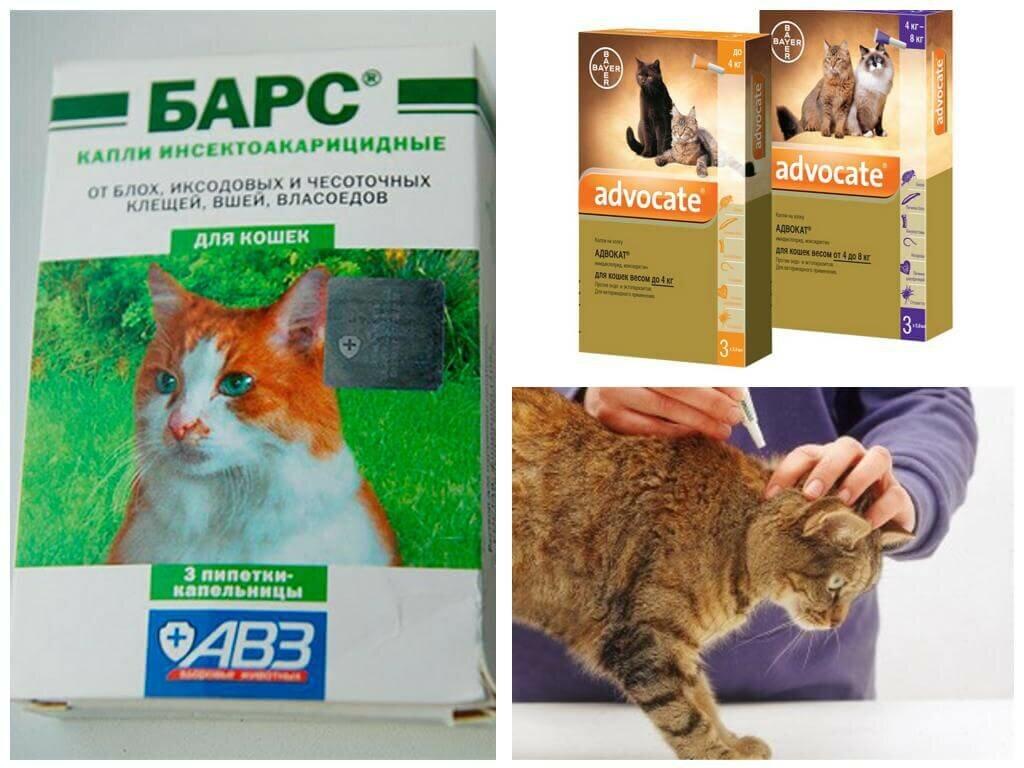 Как вывести блох у кошки в домашних условиях подручными средствами