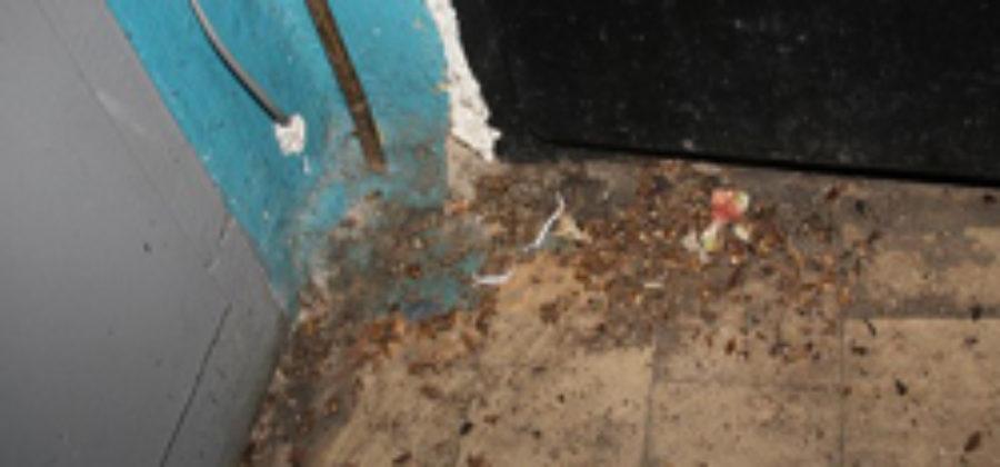 Тараканы от соседей: как решить проблему в разных ситуациях