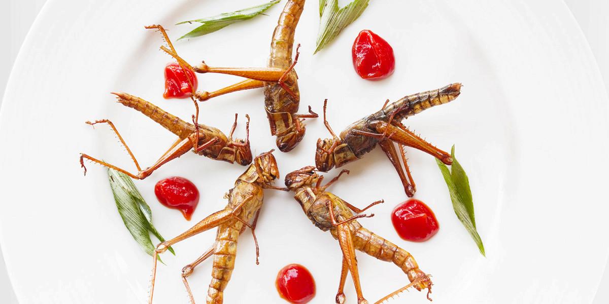 Зачем нужны тараканы