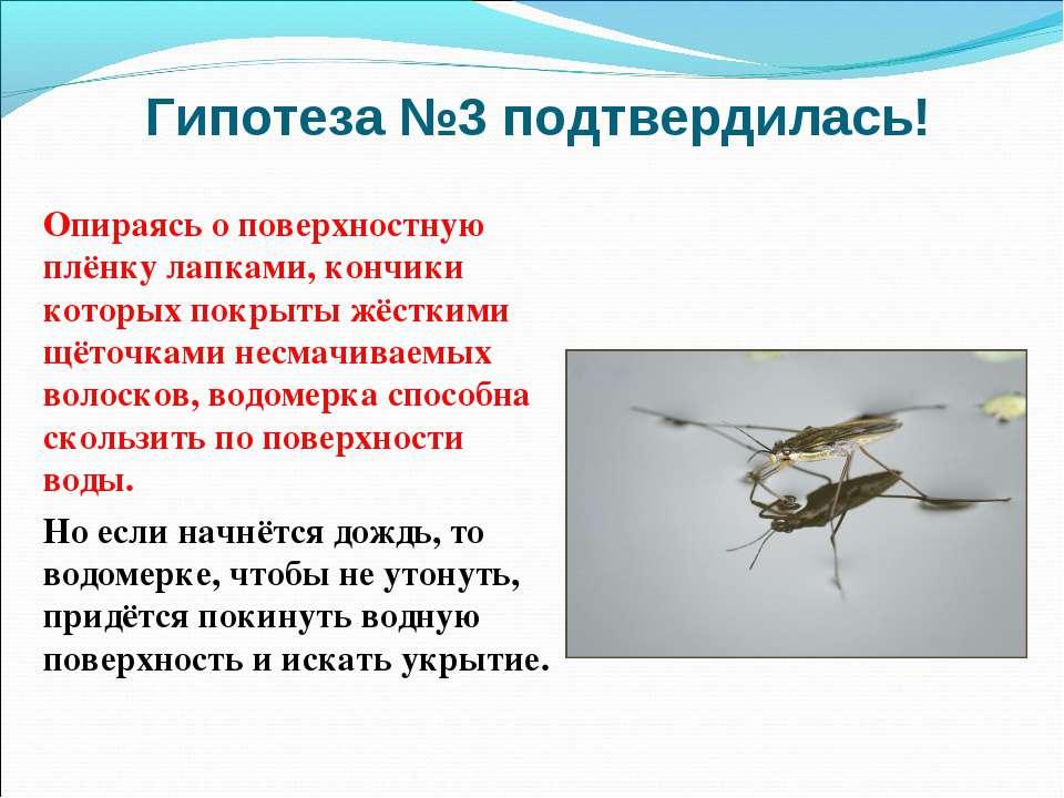 Водомерка насекомое. описание, особенности, виды, образ жизни и среда обитания водомерки | живность.ру
