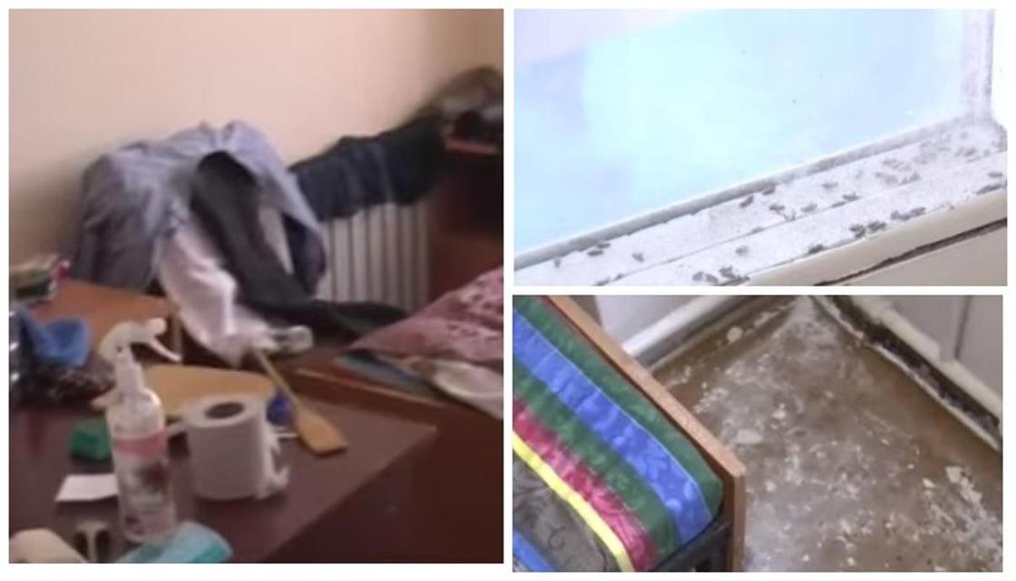 Как избавиться от клопов в квартире эффективным способом