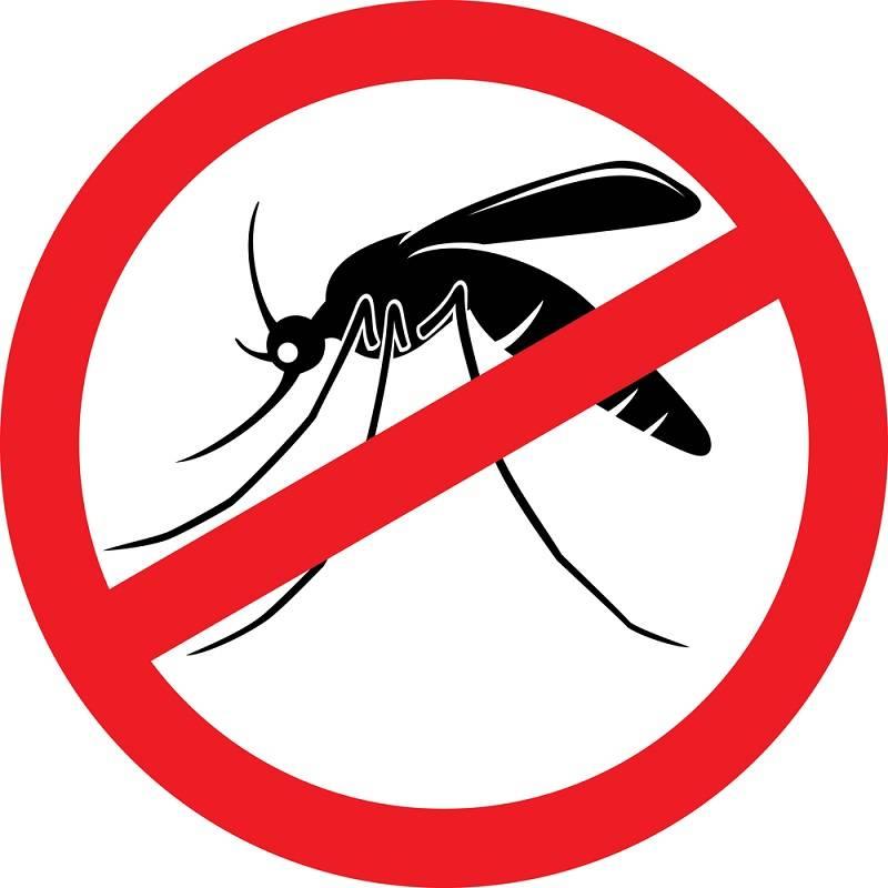 Что означает образ комара во сне – толкования по сонникам и согласно народным поверьям. к чему снятся комары в большом количестве (сонник), комары во сне