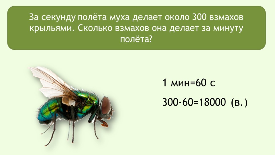 С какой скоростью летают мухи? какова скорость полета комнатной мухи? топ 3 самых быстрых насекомых в мире