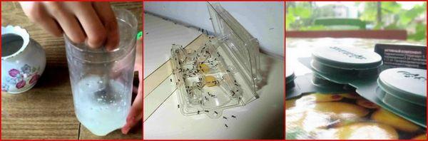 Ловушки для муравьев - виды и как ими пользоваться