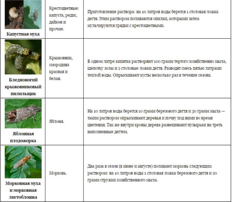 Берёзовый дёготь в огороде от вредителей: овощей, видео, отзывы, где купить