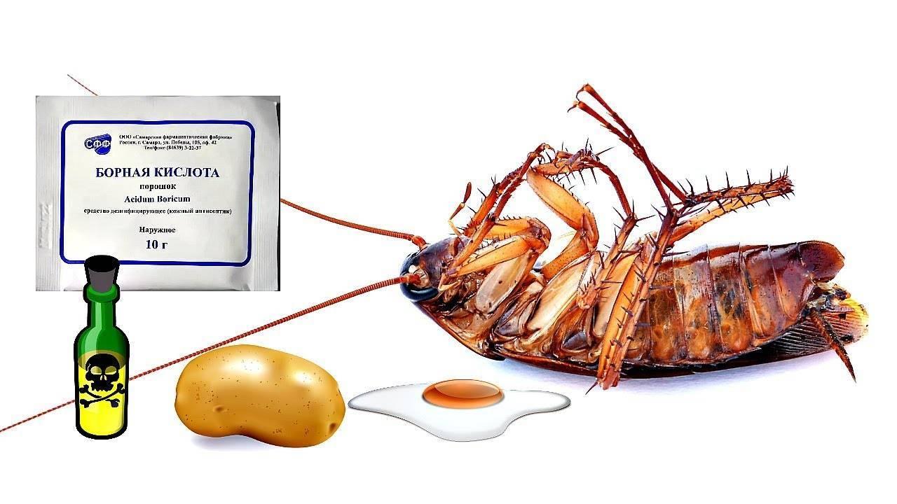 Борная кислота от тараканов: применение, рецепт с яйцом, инструкция