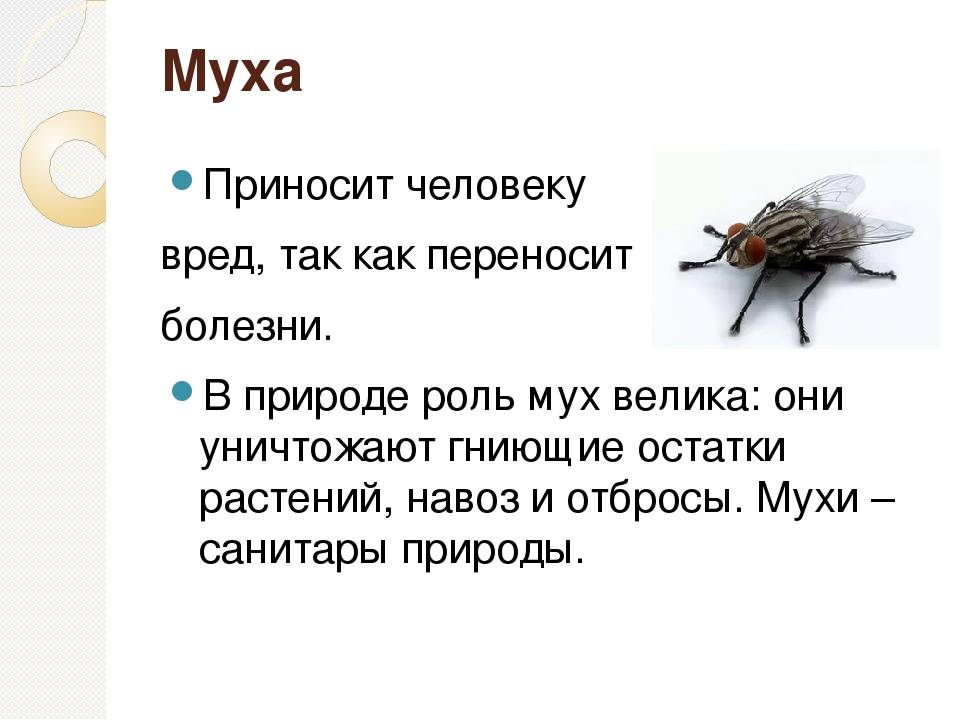 Трупные мухи атаковали поселок под новосибирском