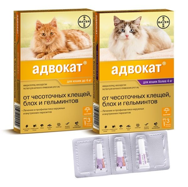 Уколы от блох: особенности инъекций для кошек, обзор современных препаратов. инъекции (уколы) для кошек от блох