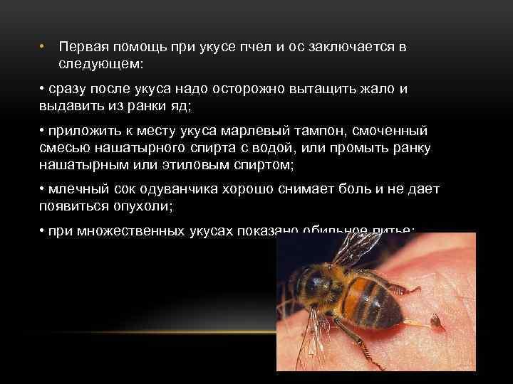 Что делать, если укусила оса - как оказать первую помощь в домашних уловиях и средства от аллергии