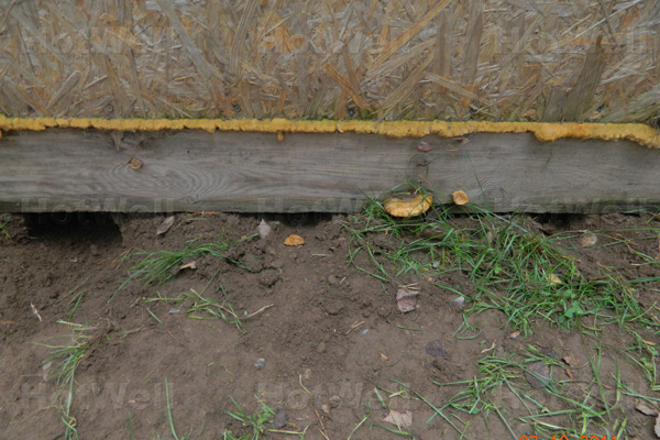 Мыши в сип домах. заводятся ли грызуны в сип панелях?