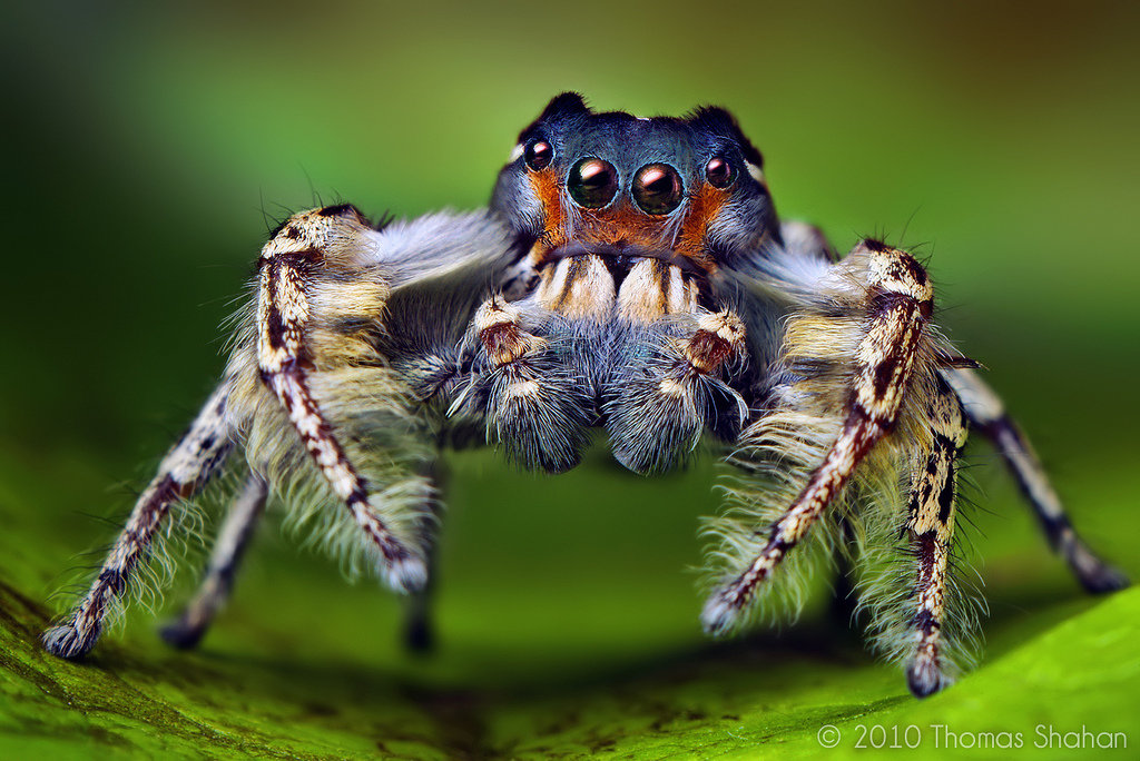 Самые страшные пауки – вся правда об арахнидах