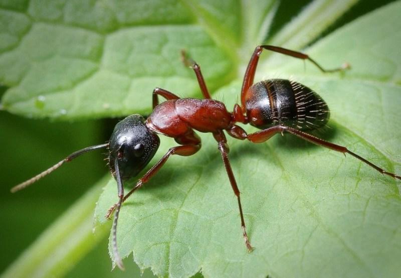 Народные поверья и современные сонники расскажут, к чему снятся муравьи