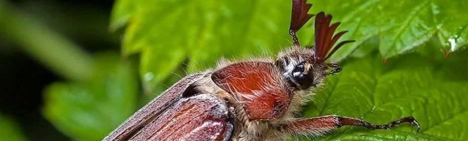 К чему снятся жуки. сонники про жуки во сне женщины