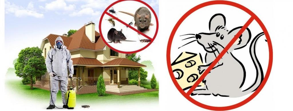 Дератизация и дезинсекция: что это такое, виды и методы обработки помещений от грызунов и вредных насекомых