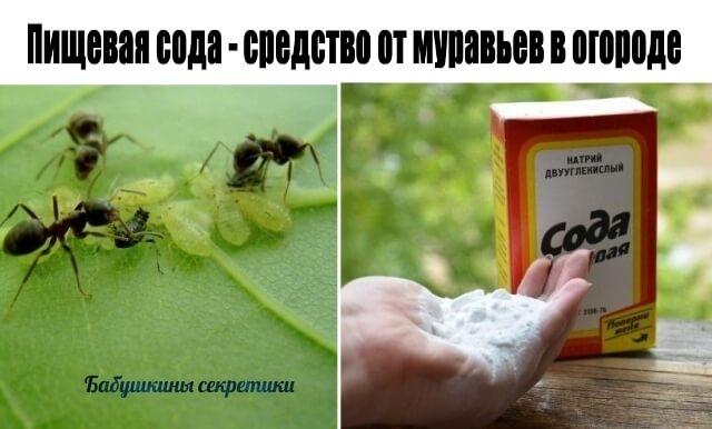 Сода от муравьев - как избавиться от насекомых навсегда по народным рецептам