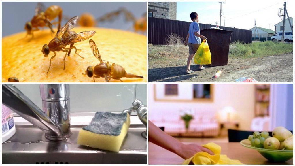 Как избавиться от мух в доме- действенные народные средства