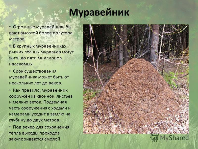С какой стороны дерева муравьи будут строить муравейник