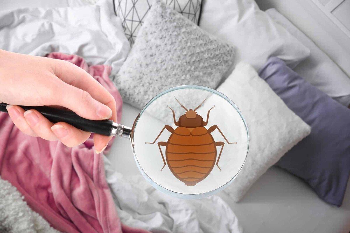 Симптомы и признаки постельных клопов в квартире