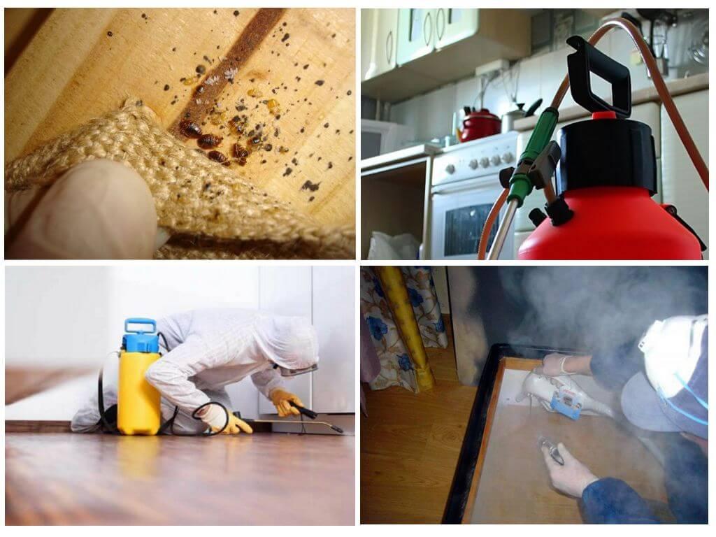 Обработка от блох: обработка квартиры, выбор препарата
